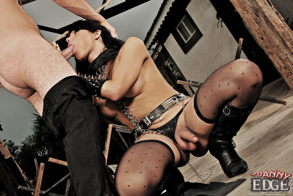 Submissive men dominated by shemales